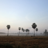 Southern landscape in Phatthalung, Thailand - Laetitia Botrel | Photography